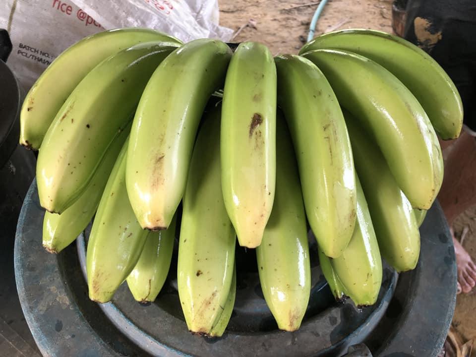 ใช้ bio100h2o รองก้นหลุมปลูกกล้วย รดน้ำเดือนละครั้งเท่านั้นพอ